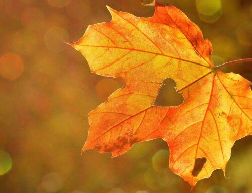 MÆRKEDAG I BØRNEHØJDE: Hvad er efterårsferie?