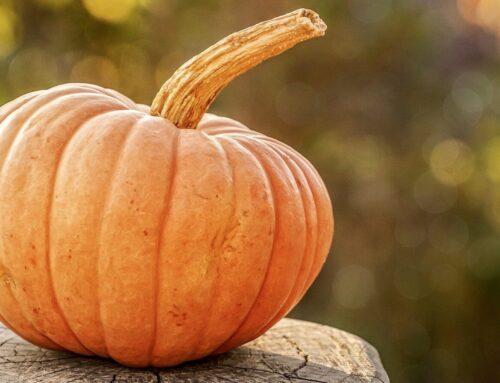 MÆRKEDAG I BØRNEHØJDE: Hvad er Halloween?